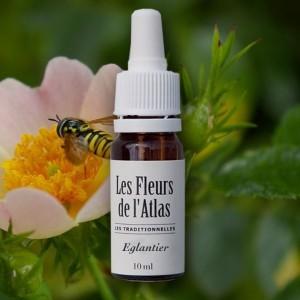Fleurs de l'atlas Eglantier dynamisme 10 ml
