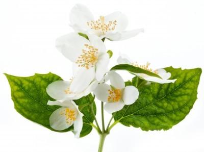 Flore et sens Huile de jasmin 100 ml
