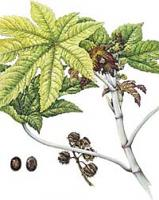 NaturEsoin Huile de Ricin (50 ml)
