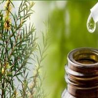 RACINE VITA Huile essentielle de l'arbre à thé 10 ml